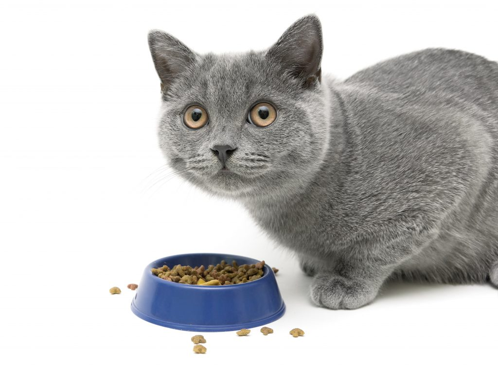 weight loss tips for cats
