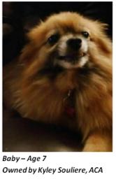 dog-senior-blog