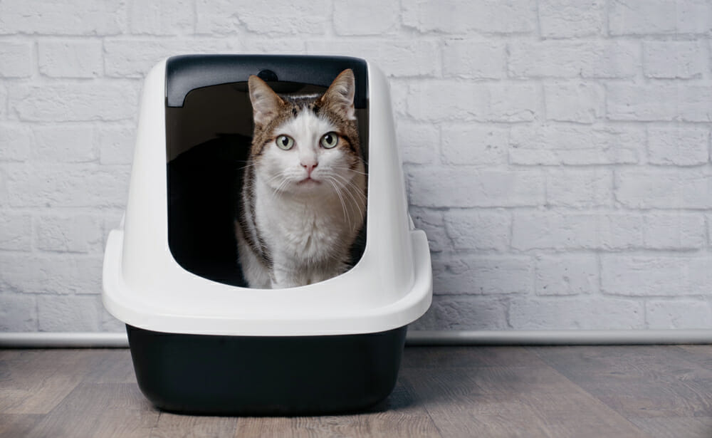 Why Is My Cat Peeing Outside of the Litter Box? - Mayfield Veterinary Clinic